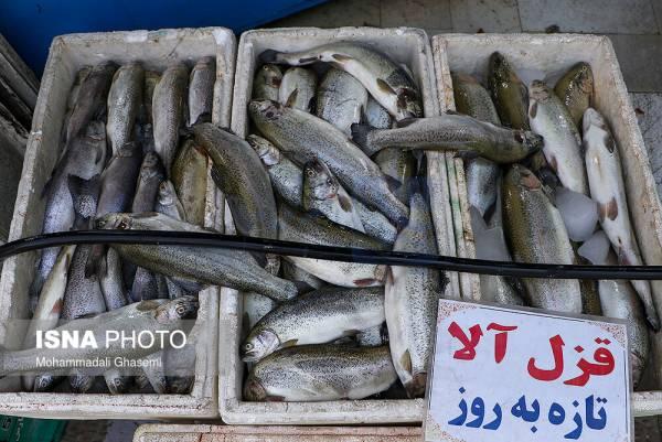 🔺 چرا ماهی گران شده است؟