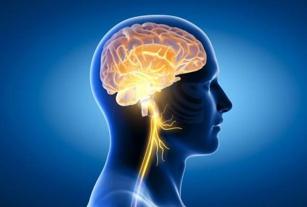 🔺 کمکهزینه ۸ میلیون دلاری برای بررسی ارتباط روده و مغز در بیماری پارکینسون!