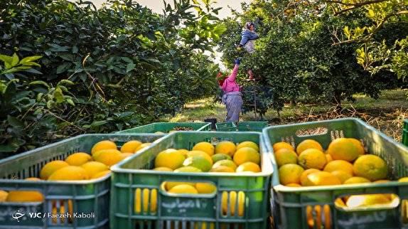 تلفیق فناوری با کسب وکارهای سنتی / استارت آپها به کمک کشاورزی میآیند